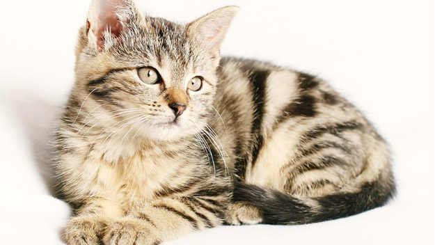 Co byste měli vědět když si pořizujete kočku