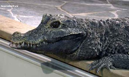 Největší pražské Zoo krokodýlů je v Holešovicích