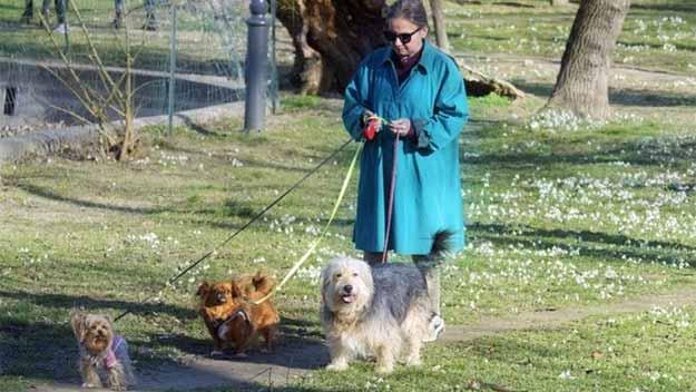 Majitelé psů jsou zdravější. Mají nižší riziko onemocnění srdce a cév, potvrdila nová studie