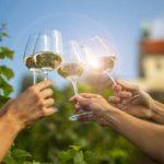 Léto ve znamení vína v trojské botanické zahradě