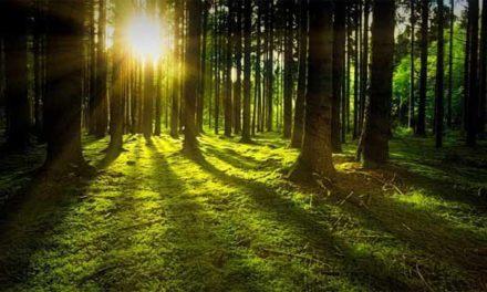 Pobyt v lesích prospívá zdraví, zjistili vědci!
